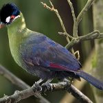 Birds of Mountain Elgon National Park