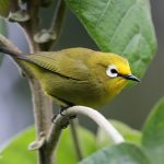 Bird watching Tours at Mount Elgon