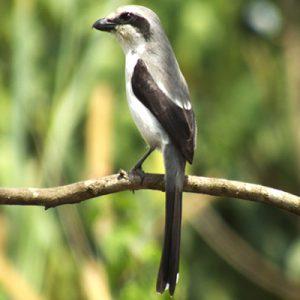 Bird species at Mountain Elgon National Park