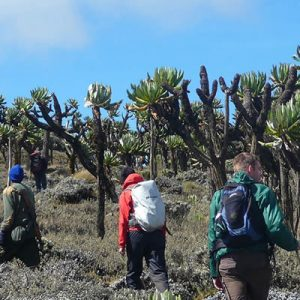 Mountain ELgon Hiking Safaris