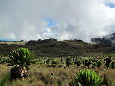 Climate & Vegetation at Mount Elgon