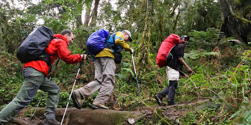 Hiking Tours at Mountain Kilimanjaro